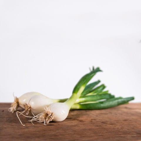 Legume_Onion-bottes